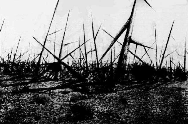 Landscape of Thorns