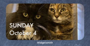 Calendar widget with a photo of my cats behind it.